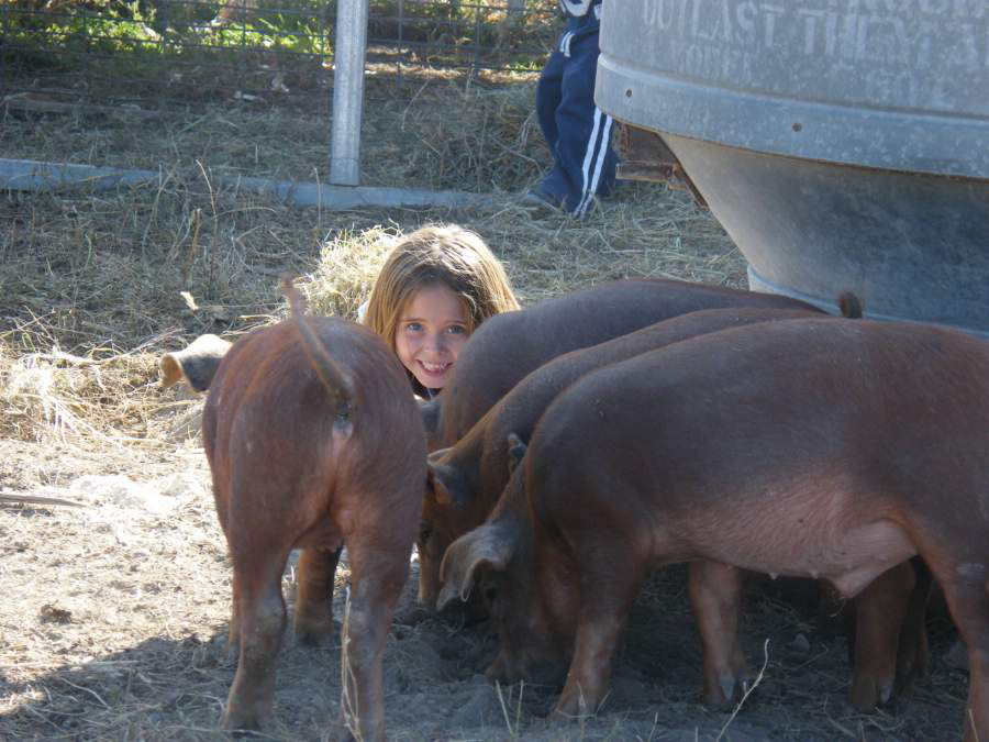 Little Girl with Piglets in olathe, co
